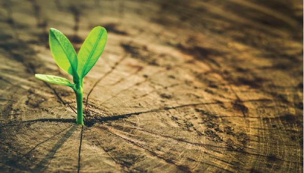 Nestlé a favor de un sistema alimentario regenerativo